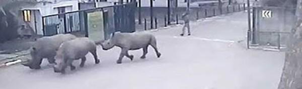 rinocerontes1