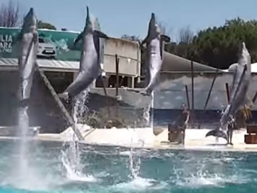 Delfines Madrid