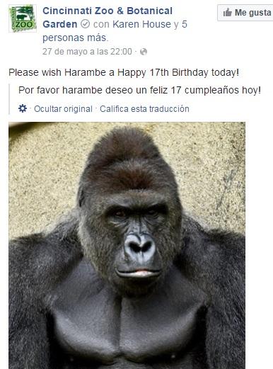 harambe birthday