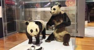 Chu Lin en el museo