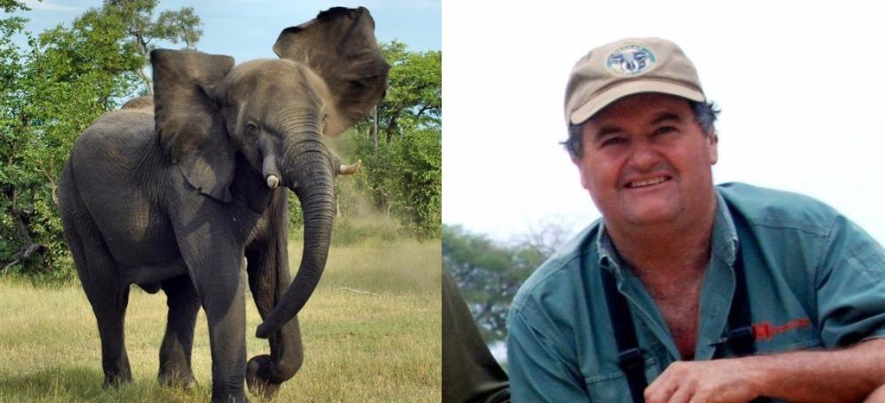 Ian-Gibson-Elephant