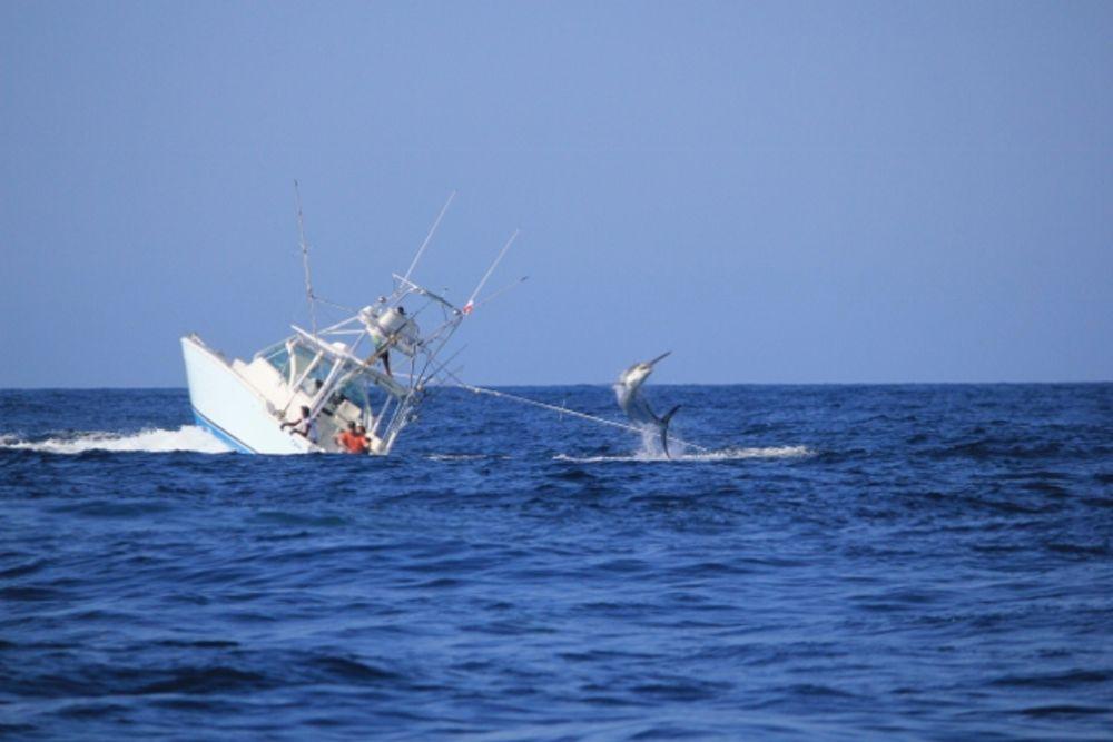 marlin-sinks-boat002